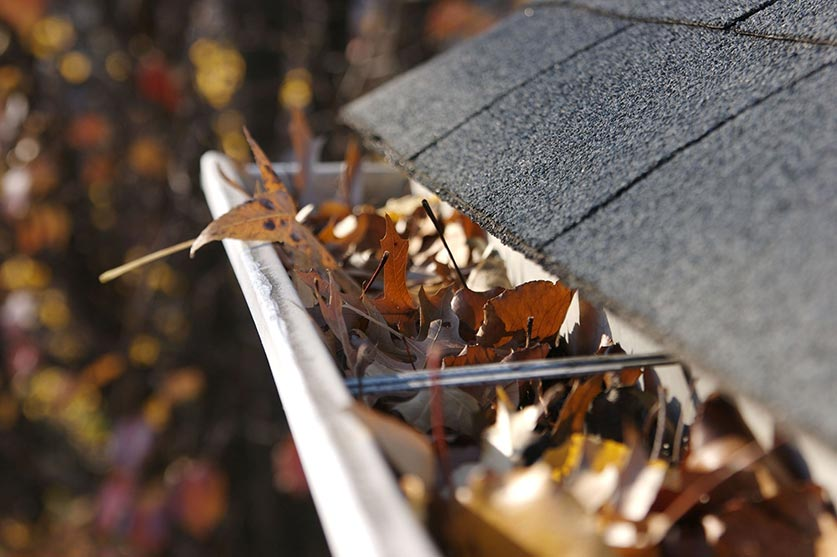 cluttered gutter with leaves
